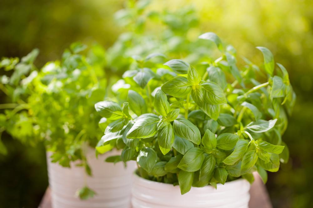 Plante pentru bucataria de vara