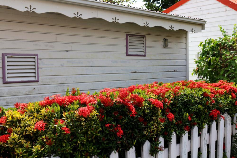 Gardurile cu flori