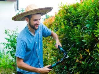 plantarea si ingrijirea gardului viu