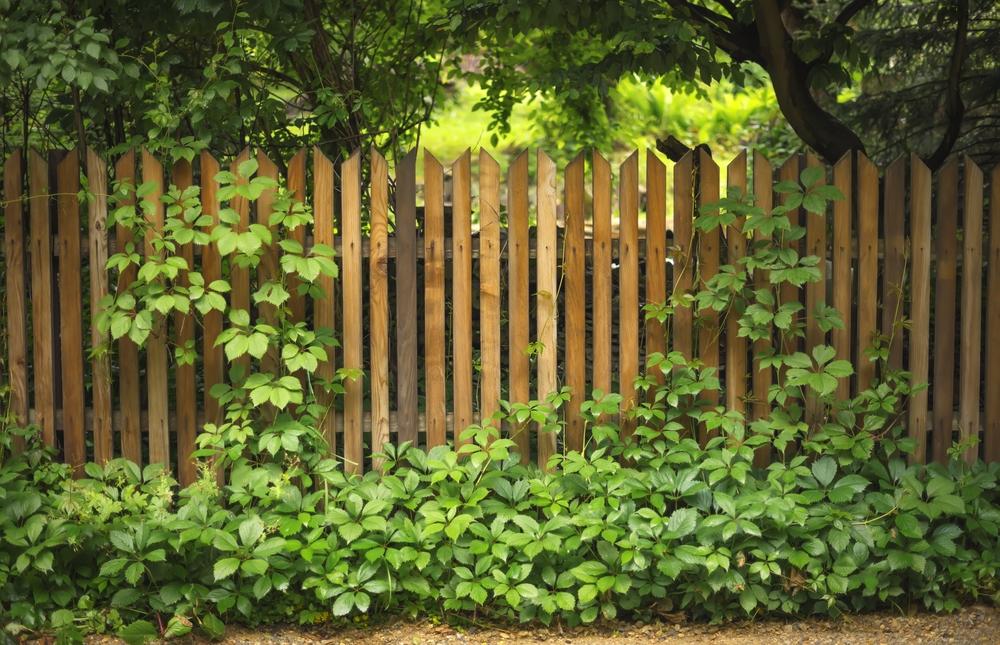 Gardurile cataratoare