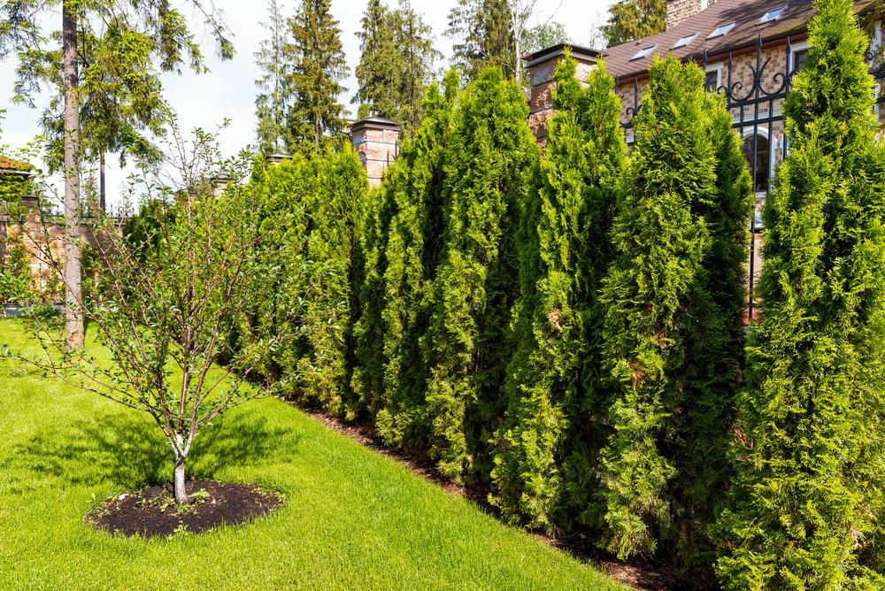 Gardurile vesnic verzi