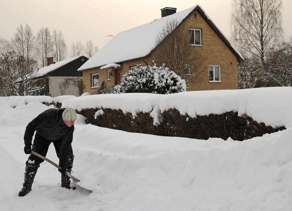 Ingrijire gard viu iarna