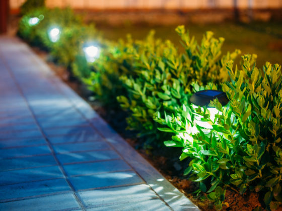 luminatul gradinii